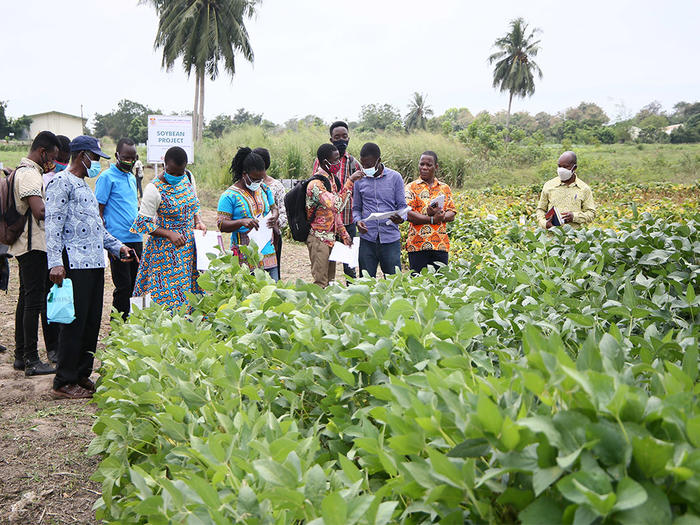 Assessment of soybean on the field